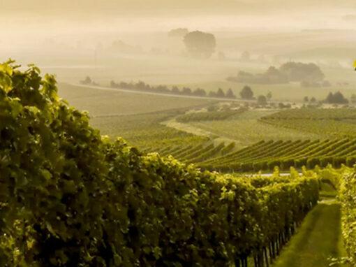 Victory wines